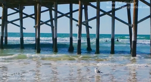 Photograph of Newport Beach Pier's reflection in the ocean with a seagull by M. Caulder.
