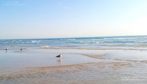 Photograph of a seagull and its reflection in the ocean by M. Caulder.