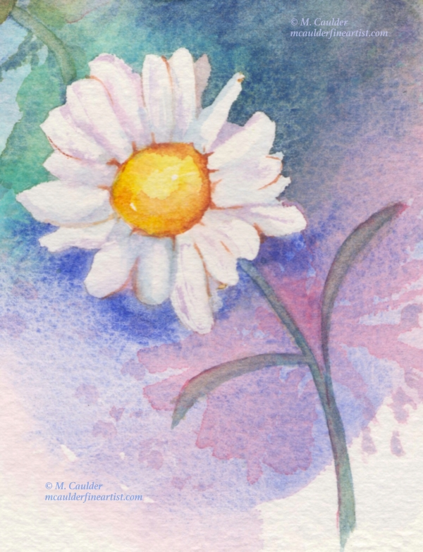 Watercolor sketch of a white daisy by M. Caulder.