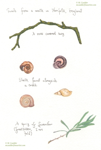 Watercolor study of flora and snail shells from England by M. Caulder.