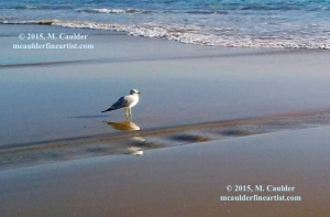 Photograph of a seagull and a ribbon of sand by M. Caulder.