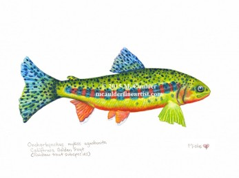 Watercolor painting of a California Golden trout by M. Caulder.