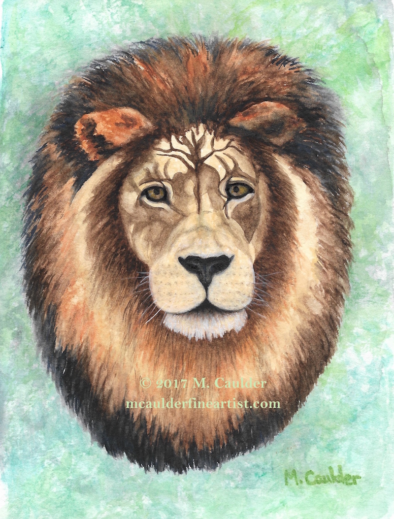 Watercolor painting of a male lion's head by M. Caulder.