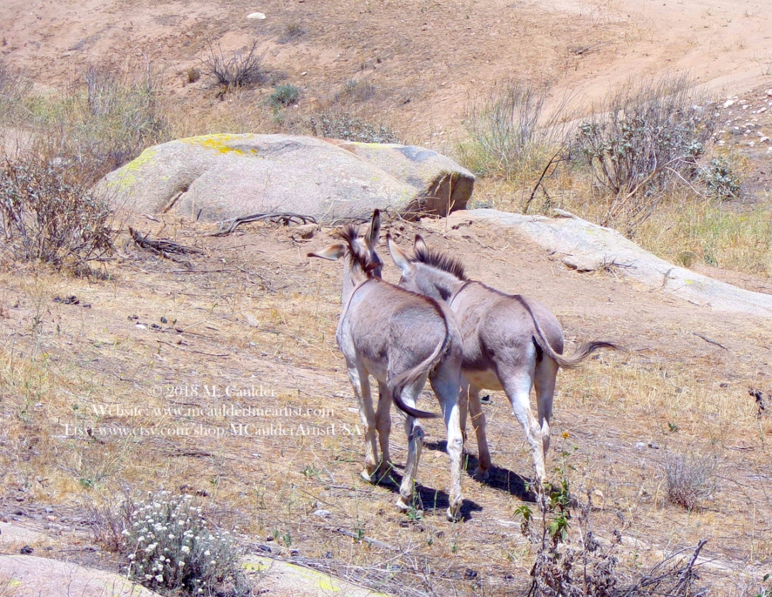 *MoVal Burros 2 copyright
