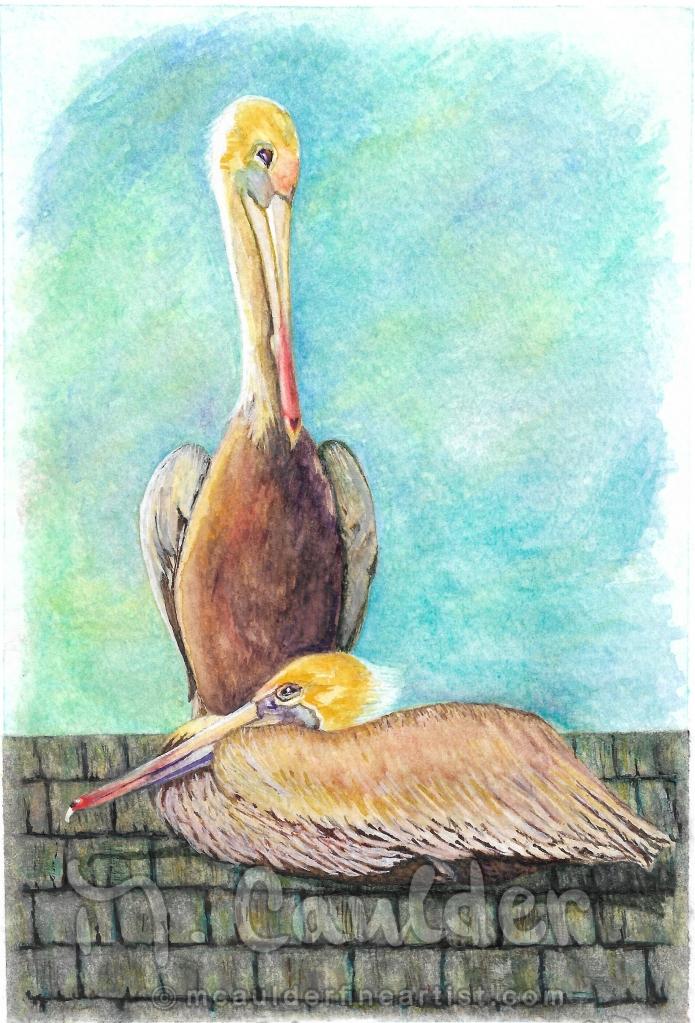 Pelicans, Newport Beach, CA, Nesting Birds
